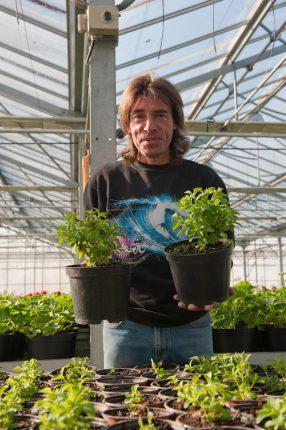 Jean-Pierre Fauré a de grandes ambitions pour la production de stevia dans le Lauragais.