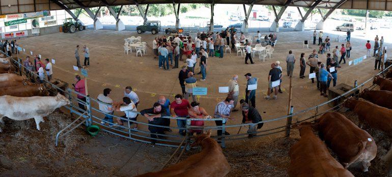75 vaches témoignaient du savoir-faire des éleveurs du Comminges en matière d'engraissement.