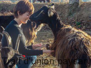 Lise soigne aussi bien les gros animaux (bovins, chevaux)... que les petits.