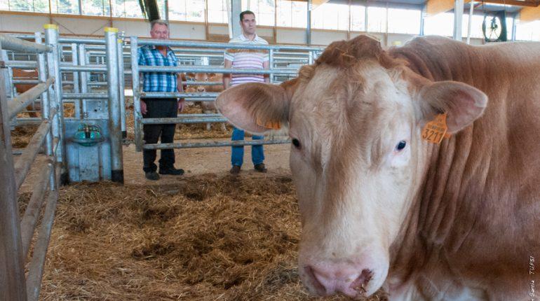Alain Beltran et Guilhem Ostende, deux passionnés de techniques d'élevage bovin.