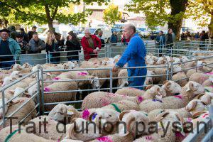 Terre Ovine organise ces ventes d'agnelles de reproduction depuis 30 ans.