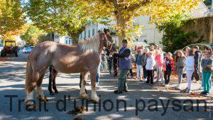 Les chevaux de trait impressionnent toujours autant - et pas uniquement les plus jeunes.