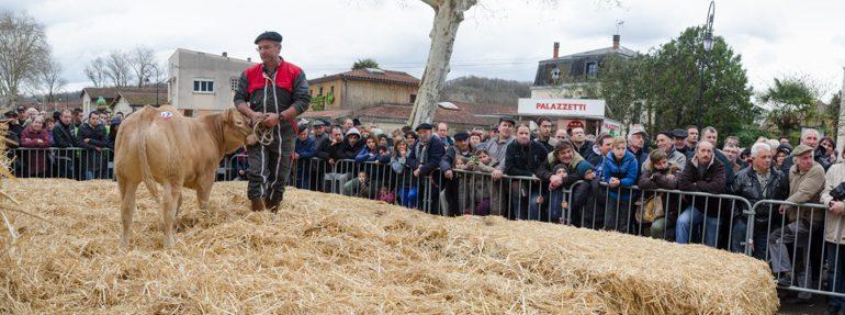 Beaucoup de monde pour assister à la vente aux enchères des meilleurs animaux du concours