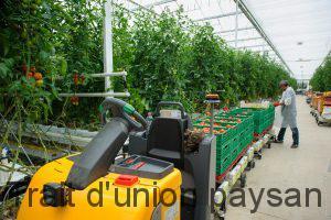 Les tomates sont cueillies à maturité et livrées le jour même dans la région toulousaine Et les premiers résultats sont plus qu'encourageants. La construction des serres a débuté le 25 août 2015 et le 4 février suivant, 30.000 m² étaient opérationnels. Le 8, les 90.000 premiers pieds de tomate ont été installés, avec quelques semaines de retard pour une variété, la Clodano, qui se plante normalement en décembre. « Nous avons récolté 1.500 T entre avril et juillet, qui se sont écoulées très vite, à tel point que je manque de produit aujourd'hui pour répondre à la demande », se félicite Gilles Briffaud. « L'année prochaine, nous devrions en produire 300 de plus, en commençant à l'heure. » D'ici 2018, Les serres de Bessières devraient disposer de 100.000 m² de surface de production. De quoi atteindre l'objectif annuel de 4.500 T de tomates. Elles sont commercialisées auprès du M.I.N., des commerces de gros et demi-gros et des GMS de la région. Livrées dans un colis neutre, elles arborent un petit drapeau « Tomate de Toulouse » qui - espère l'agriculteur - fera la différence lors de l'achat par le consommateur. Un consommateur que Les serres de Bessières comptent également séduire par le mode de production