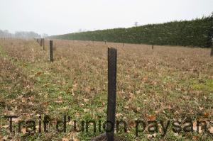 Les arbres ont été plantés sur une parcelle d'orge avec un couvert de trèfle, qui feront place à un soja au printemps.