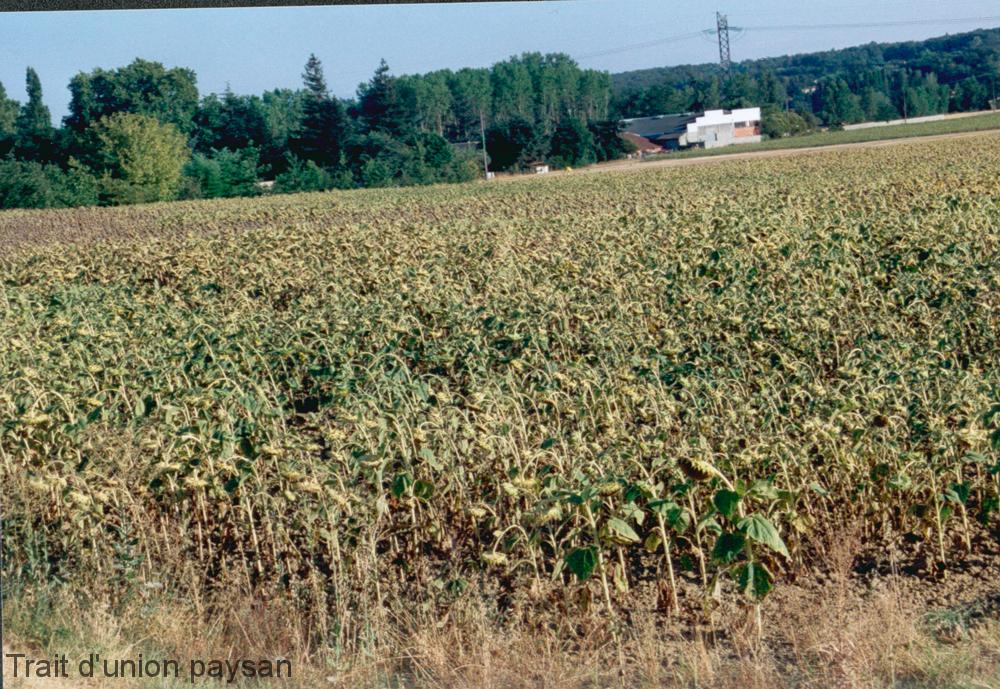 Le Comité national de gestion des risques agricoles (CNGRA) refusait la demande