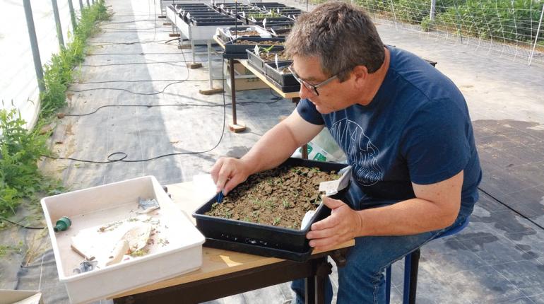 Alain Rodriguez, ingénieur spécialiste en malherbologie, compte et identifie les plantes de l'essai.