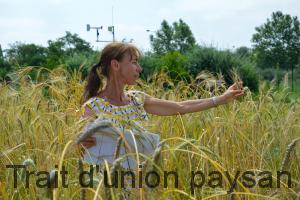 Pour Marie-Hélène Robin, les maladies se propagent moins vite dans les blés hétérogènes comme le blé Poulard.