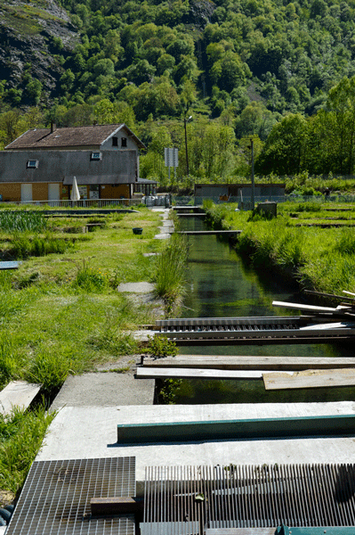 190514-pisciculture-Viviers-du-Comminges-28
