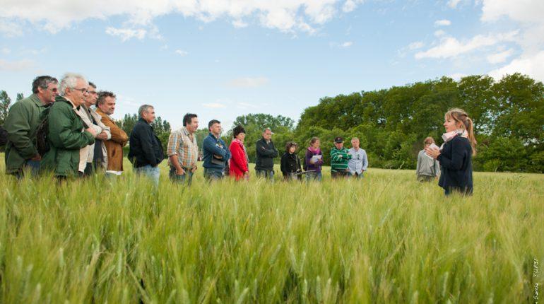 Un des groupes d'agriculteurs suit la présentation d'une élève d'Auzeville sur le désherbage du blé.