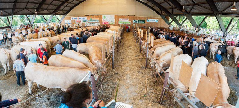 Avec 180 animaux présentés, le concours de bovins de boucherie a atteint sa capacité optimale.
