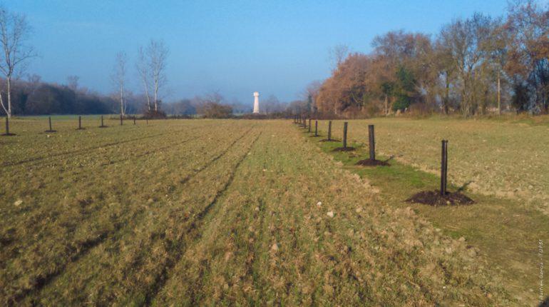 La parcelle verra se succéder deux cultures par an: blé tendre et sarrasin. (photo: Ondes)