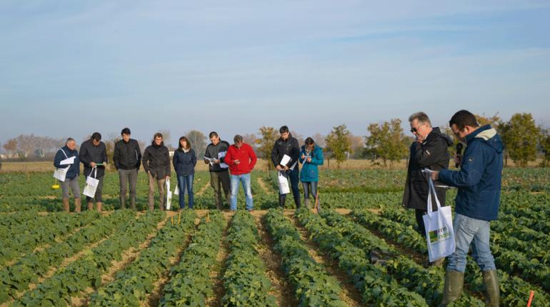 Chez Terres Inovia, qu'il est tout à fait possible de produire du colza en bio et d'atteindre un niveau de rendement et de rentabilité acceptable.